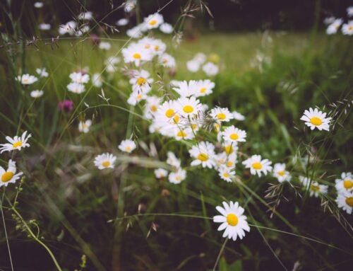 Glad Midsommar och semesterstängd blogg /Markus Forsström